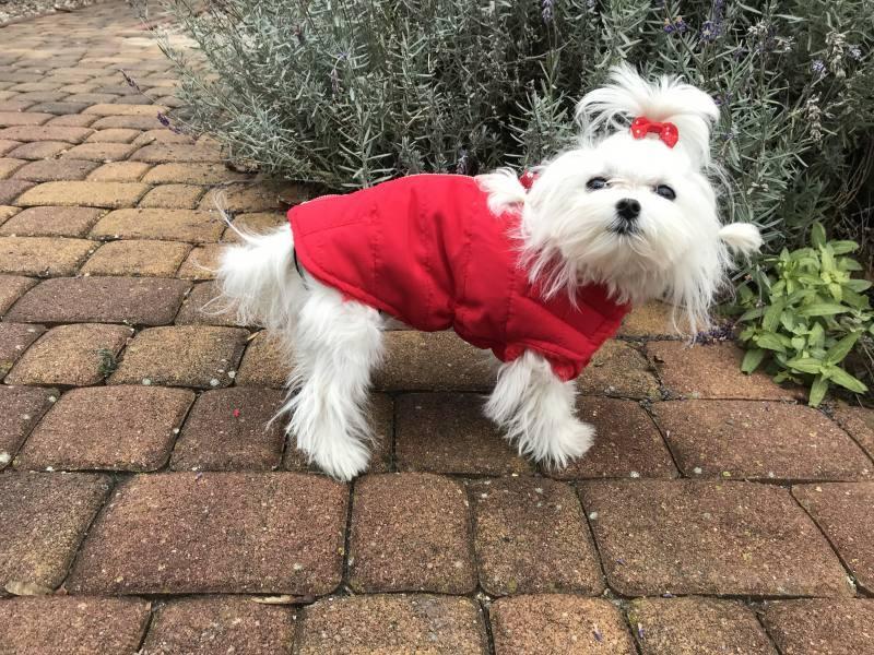 5992e77ec277 Kurtka zimowo jesienna dla psa ALASKA RED